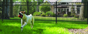 A dog runs near a pet safe fence