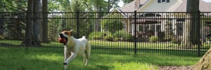 Aluminum fence in a backyard